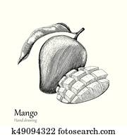 Mango hand drawing engraving style