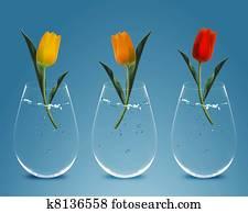Three colorful Tulips