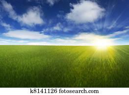 Sunny sky over grassy field