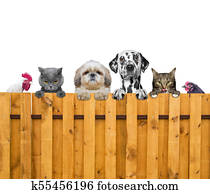dogs, cats, chicken and cock look through a fence