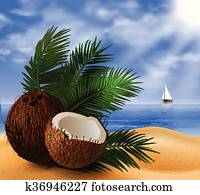Coconut tropical nut fruit