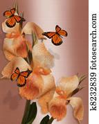Butterflies and lilies