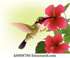 kolibri, mit, rote blume