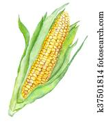 Watercolor Corn Painting