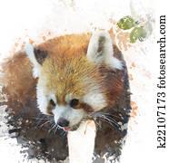 Watercolor Image Of Red Panda