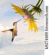 Hummingbird sunflower concept.