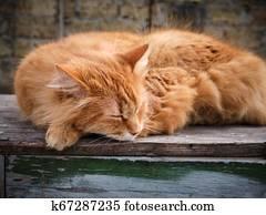 Gatto Domestico Curled Up Su Uno Rosso Cuscino Davanti Uno Stufa