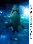 Shark silhouette underwater