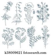 Herbs wild flowers botanical medicinal organic healing plants vector set in hand drawn style