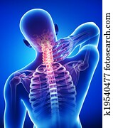 Anatomy of male neck pain on blue