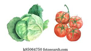 Watercolor cabage and tomato vintage botanical illustration