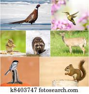 Wildlife collage.
