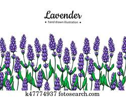 Lavender vector drawing border. Isolated wild flower and leaves. Herbal artistic style illustration.