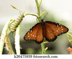 Butterfly and caterpillar on plant