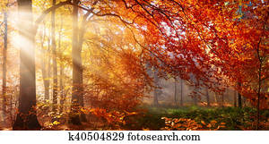 Red autumn tree with misty sunrays