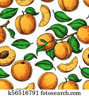 apricot color Apricot seamless pattern. Vector drawing. Hand draw