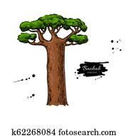 Baobab tree vector drawing. Isolated hand drawn botanical illus