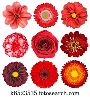 Selection of Red Flowers Isolated on White