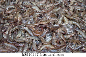 fresh shrimps or prawns