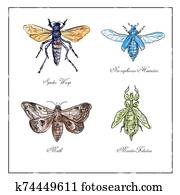 Spider Wasp, Moth, Necrophorus Humator beetle, Mantis Foliatus Vintage Collection