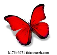 Morpho red butterfly