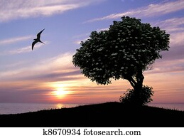 Sunset Tree Tranquility