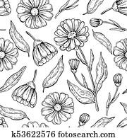 calendula, seamless, pattern., freigestellt, medizinische, blume, und, bl?tter