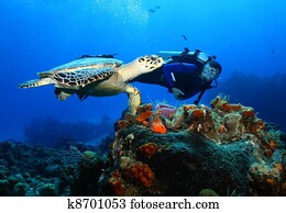 Scuba Diver and Hawksbill Turtle