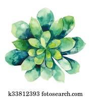 Watercolor green succulent