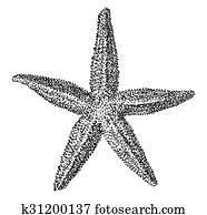 Starfish, vintage engraving.