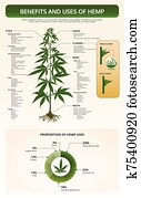 Benefits and Uses of Hemp vertical tetxtbook infographic