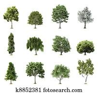 Set Trees. Vector