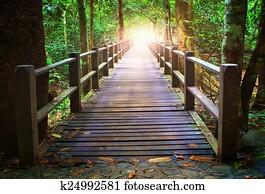 perspective of wood bridge in deep forest crossing water stream