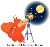 Squirrel astronomer