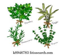 Scarborough Fair Herbs