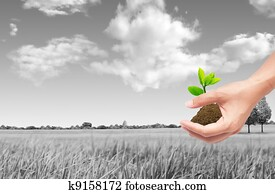 hand holding sprout with soil, green eco concept