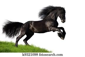 Black horse isolated on white
