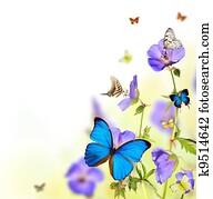 Butterflies in meadow