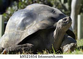 Wildlife and Animals - Galapagos Tortoises
