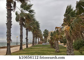 a storm wind stirred the palms of the coast