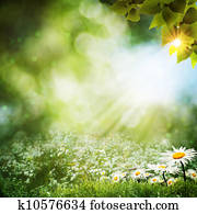 Abstract summer backgrounds with daisy flowers