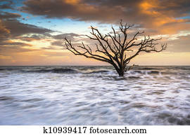 Botany Bay Edisto Island SC Boneyard Beach sunset landscape Charleston South Carolina east coast