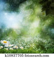Daisy flowers under the sweet rain, natural backgrounds