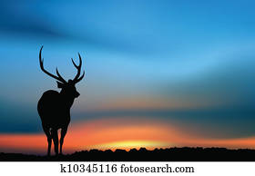 Deer at the sunset