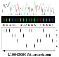 dns, sequencing
