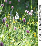Flores meadow