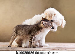 Friends - dog and cat together