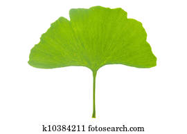 gingko blatt stock fotos und bilder gingko blatt suchen sie lizenzfreie bilder und. Black Bedroom Furniture Sets. Home Design Ideas