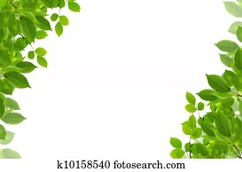 green fresh leaves frame