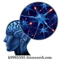 Human Active Neurons